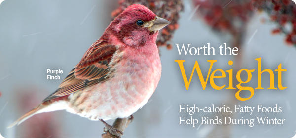 Help Birds Survive Winter