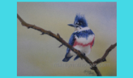 Oct 2018 Kingfisher Avian Art preview